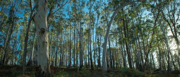 victorian bush
